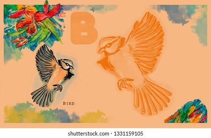 hand drawn animal for English alphabet , Bird
