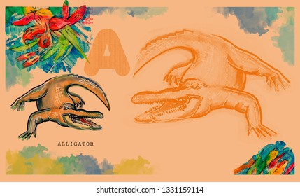 hand drawn animal for English alphabet , Alligator