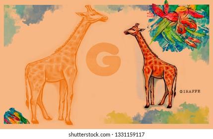 hand drawn animal for English alphabet , Giraffe