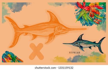 hand drawn animal for English alphabet ,  Xiphias