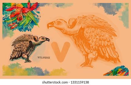 hand drawn animal for English alphabet , Vulture
