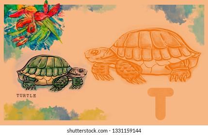 hand drawn animal for English alphabet , Turtle