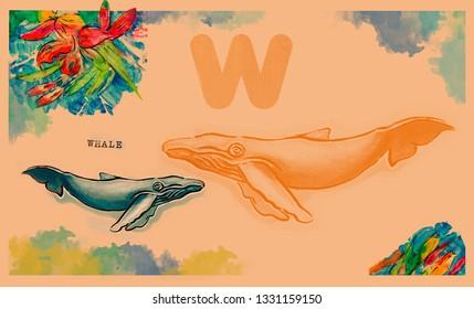 hand drawn animal for English alphabet , Whale