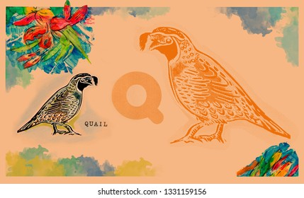 hand drawn animal for English alphabet , Quail