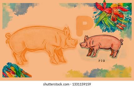 hand drawn animal for English alphabet , Pig
