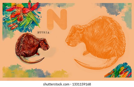 hand drawn animal for English alphabet , Nutria