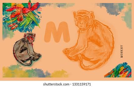 hand drawn animal for English alphabet , Monkey