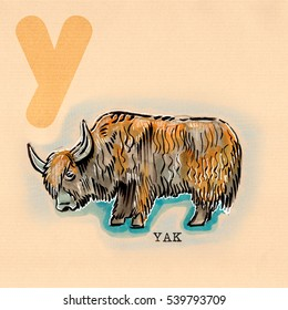 hand drawn animal for English alphabet , Yak