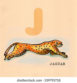 hand drawn animal for English alphabet , Jaguar