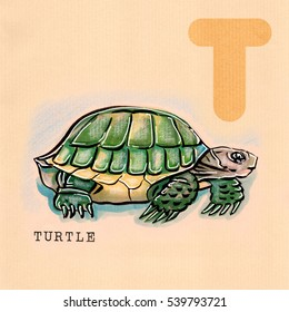 hand drawn animal for English alphabet , Turtle