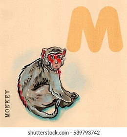 hand drawn animal for English alphabet,  Monkey