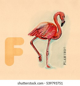 hand drawn animal for English alphabet , Flamingo