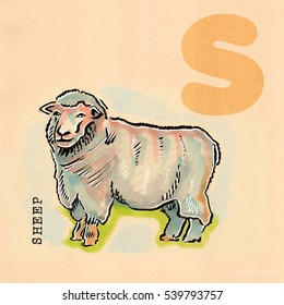 hand drawn animal for English alphabet , Sheep