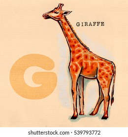 hand drawn animal for English alphabet , Giraffe