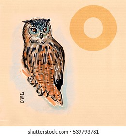 hand drawn animal for English alphabet , Owl