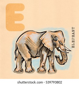 hand drawn animal for English alphabet , Elephant