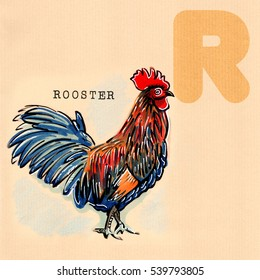 hand drawn animal for English alphabet , Rooster