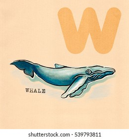 hand drawn animal for English alphabet , Whale
