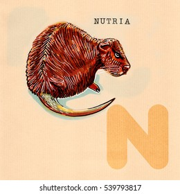 hand drawn animal for English alphabet , Nutria