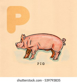 hand drawn animal for English alphabet , Pig