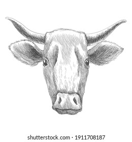 Hand drawn animal. Farm livestock. Vintage engraving illustration for poster or web. Hand drawn cow sketch in a graphic style
