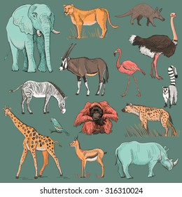 Hand drawn animal planet illustration such as elephant, giraffe, lioness, hyena, orangutan, parrot, rhino, zebra, deer, lemur, ostrich, anteater, flamingo