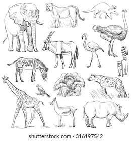 conjunto de planeta animal dibujado a mano,