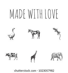 Hand drawn animals sketches set. Collection of cow, elephant, gecko and other sketch elements.