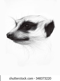 Hand drawn ballpoint pen drawing of suricata or meerkat isolated on white.
