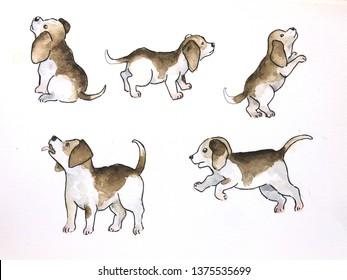 Hand drawn beagle watercolor dog character