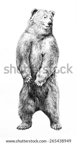 hand drawn bear standing on hindのイラスト素材 265438949 shutterstock
