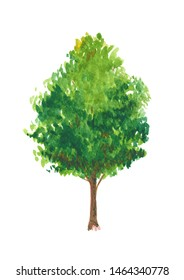 hand drawn big green tree watercolor illustration, isolated nature on white background