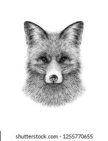 Hand drawn black and white ink illustration of fox portrait. Isolated on white background. Realistic, vintage, pointillism style. Great for print, card, tattoo