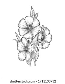 Hand drawn black and white spring flowers isolated on white background. Ink floral illustration for your design.