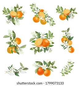 Hand drawn bouquets and compositions of blooming orange tree branches isolated on a white background