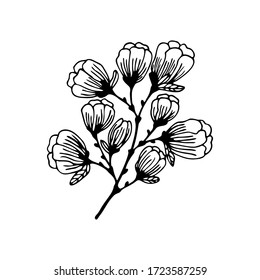 Hand drawn a branch of a flowering tree isolated on a white background. Doodle, simple outline illustration. It can be used for decoration of textile, paper and other surfaces.