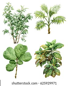 Hand drawn  branches and leaves of tropical plants. Watercolor set of exotic green bushes and small trees isolated on white background.