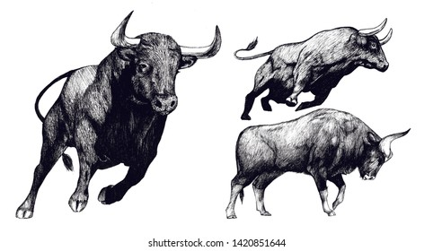 Hand drawn bull, Toro sketch