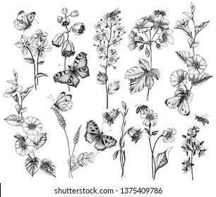 Hand drawn butterflies, bees and wildflowers isolated on white background. Set of monochrome pencil drawing flying and sitting insects near the flowers.