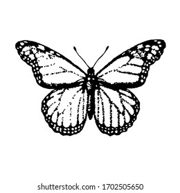 Hand drawn butterfly illustration isolated on white background