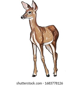 Hand drawn color picture of an animal roe deer
