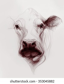 Hand drawn cow face isolated on white background. Ballpoint pen drawing.