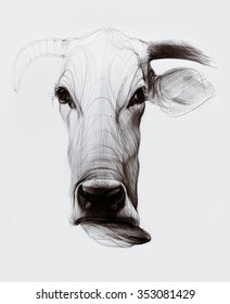 Hand drawn cow illustration isolated on white background. Ballpoint pen drawing.