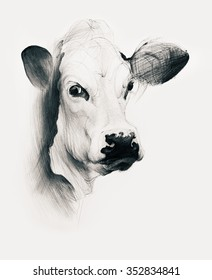 Hand drawn cow isolated on white background. Ballpoint pen drawing.