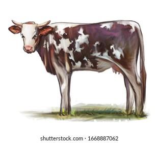 hand drawn cow portrait. digital cow illustration.