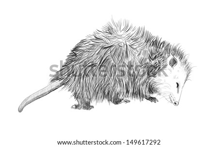 Royalty Free Stock Illustration Of Hand Drawn Cute Animal Sketch
