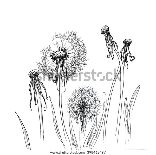 Hand Drawn Dandelion Isolated Over White Stock