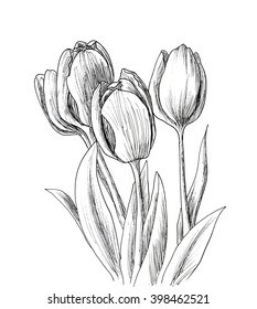 hand drawn sketch tulips flower black stock vector royalty free