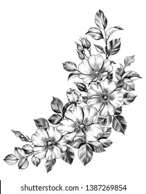 Hand drawn Dog-Roses corner composition isolated on white background. Pencil drawing monochrome flowers in vintage style, t-shirt design, tattoo art.