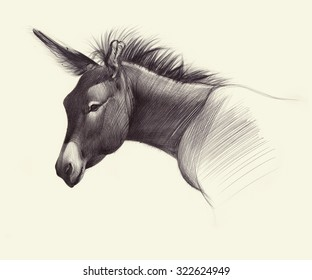 Hand drawn donkey. Ballpoint pen drawing.